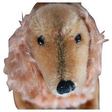 Vintage Steiff Waldi Weiner Dog Long Haired dachshund Very Photogenic What A Coat