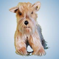 "Steiff ""TERRY"" Yorkshire Terrier Dog (4085/28) Rare"