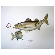"""22 """"STRIPED BASS"""" by GUY COHELEACH Signed/Autographed Collectors Print 1968"""