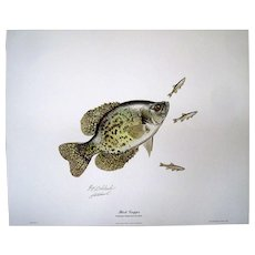 """23 """"BLACK CRAPPIE"""" by GUY COHELEACH Signed/Autographed Collectors Print 1968"""