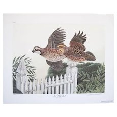 84 BOB WHITE QUAIL by JOHN A. RUTHVEN Signed & Numbered Limited Edition Print 210/1000 1976