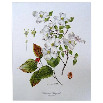 46 FLOWERING DOGWOOD by Anne Ophelia Dowden Signed Print 1969 Plate I