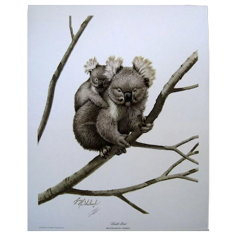 KOALA BEAR by Guy Coheleach Signed Limited Edition Print 1977