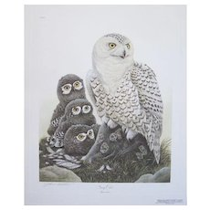 87 Snowy Owls by JOHN A. RUTHVEN Signed & Numbered Print 500/1500