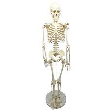Vintage Physician Office Table Top Medical Teaching Tools Skeleton Plastic Bones Display