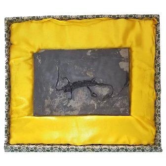 Pre-Historic Lizard Fossil in a Custom-made Case