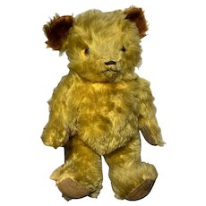"""Early Antique Jointed 13"""" Gold Bear Beautiful All Jointed Early Bear Brown Ears"""