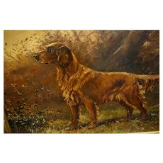 Portrait of an Irish Setter by E. D. Blair