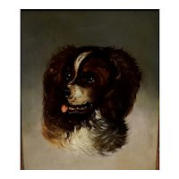 Portrait of a English Spaniel