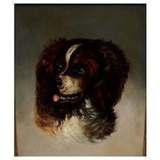 Portrait of a English Spaniel