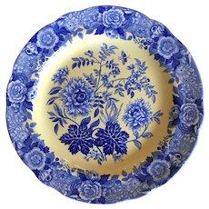 Spode blue room Jasmine scallop edge blue yellow dinner plate 10.5''
