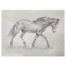 The Elegant Horse by Franco Matania