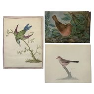 3 Beautiful studies of Birds
