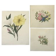 3 Beautiful studies of Flowers
