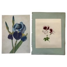 2 Lovely studies of Flowers