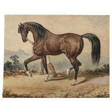 Handsome Horse 19th century watercolor
