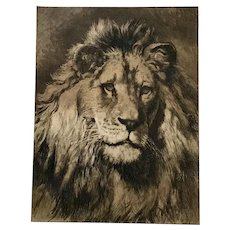 Herbert Dicksee Lion Etching 1902