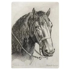 Horse head etching 19th century framed