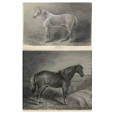 19th Century Horse Portraits Drawings