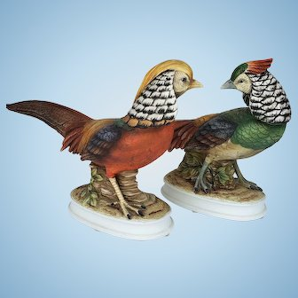 Andrea by Sadek Golden and Lady Amherst Pheasant Pair