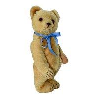 "12"" Vintage German Bear,  50s Steiff. no Button"