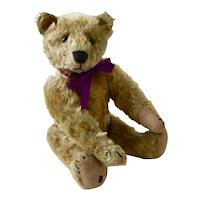 Rare 1905 Mohair Strunz Bear, 5 Claw Stitching, Boot Button Eyes