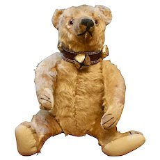"""Handsome 14"""" Bing Bear C 1912-15 with Provenance"""