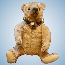 "Handsome 14"" Bing Bear C 1912-15 with Provenance"