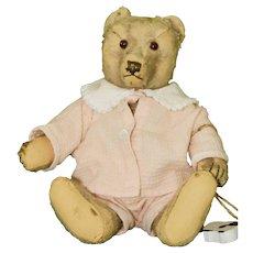 1949 Steiff Bear with Original Felt Pawpads, no ID