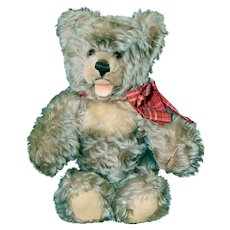 """50s Steiff 14"""" Zotty Bear, Excellent Condition, no ID"""