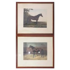 Pair of 20th Century English Prints Horses Walnut Frame by A C Havell