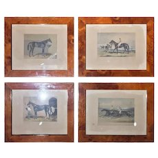 Set of Four 19th Century English Prints Walnut Root Frame