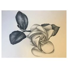 Black Rose - Original Etching by Giacomo Porzano, 1972 Ca.