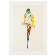 Parrot - Original Woodcut Hand Watercolored by Anonymous French Artist - Early 1900