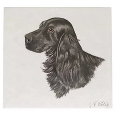 Black English Cocker Dog Portrait, Engraving by French Painter Georges Frédéric Rötig (1873-1961)