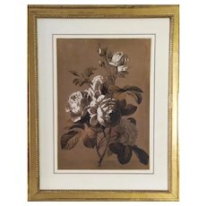 Still Life Flowers roses Gouache drawing 19th century signed  framed Botanical