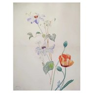 1900 - French Poppy Flower Watercolor Painting, Botanical Art