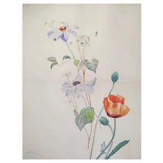 French Poppy Flower Watercolor Painting, Botanical Art 1900