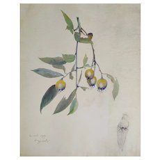 Botanical Watercolor Painting of a Rose Hip signed by French Artist, 1900
