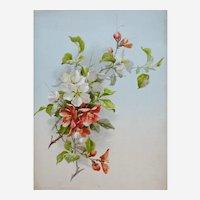 Botanical Chromolithograph Print of Red Flowers entitled Pyrus Communis and Prunus Armeniaca, 1920s