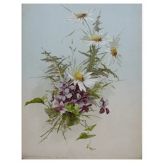 French Botanical Chromolithograph Print of Violet Flower entitled Chrysanthemum Viola 1920s