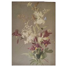 French Botanical Chromolithograph Print of Wild Flowers and Herbs 1920s