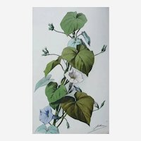 French Antique Botanical Floral Watercolor Print by Jullien, 19th C.