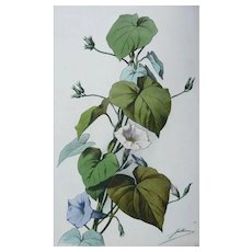19th - Botanical Floral Watercolor Print by French Lithographer Jullien
