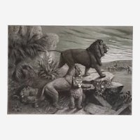 19th Century Etching of a Lion - Original Antique Engraving - Safari Animal Scene - after French oil Painting