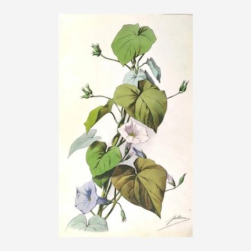 Still life flowers Original french lithography hand colored Botanical print