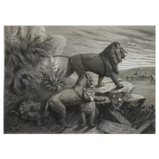 Lion Hunting  In Egypt 19th Etching