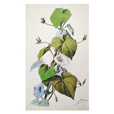 Antique Botanical Print Watercolor Lithographie Still Life Flowers  19th c