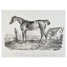 Arabian Horse Antique Lithographie By Adam 19th c