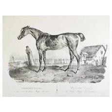 Arabian Horse Princess Royal By Adam Antique Lithograph 19th C